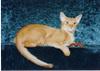 Cat_465