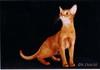 Cat_493