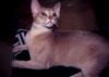 Cat_513
